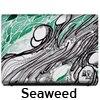 Seaweed by Mike Ming